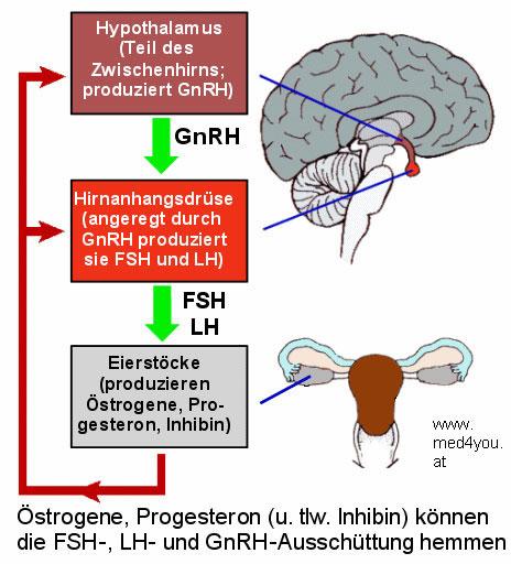 leptine activeren