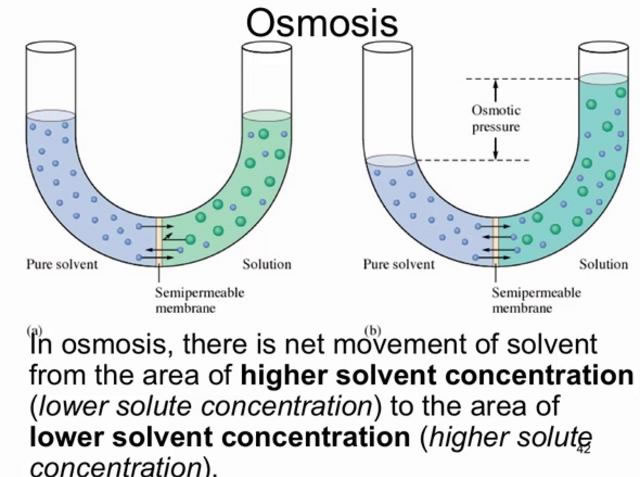 transport of solute in solvent through osmosis essay Water moves from an area of low concentration of solute to an area of high concentration of solute through a solvent transport essay osmosis.